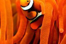 Orange! / by Vicki Chrisman-Breitmayer