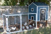 Chicken coop ideas / by Sigrún Geirsdóttir