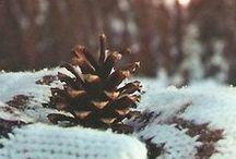 Winter / by Simona Špakovaitė