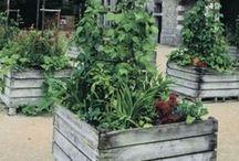 gardening / by Terry De Boer
