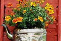 Container Gardens / by Maria Duncan