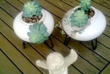 Succulents / by Žalia Studija/nata