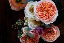 Mostly Flora / by tara murphy