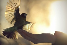 Freebird / ...none but ourselves can free our minds... / by Susan Williams