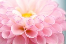 Everything Flowers... / by Dina Bhadra Legari