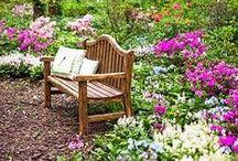 Jardins, Patis i Flors / by Tomás Ribas I