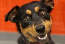 Adoptable Dogs  / by SPCA of Texas