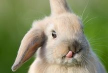 Bunny - it's my favorite word.... / by Sunnyslopegal