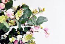 Flowers / by Studio McGee