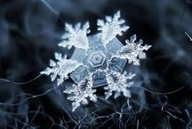 Winter Wonderland / white & cold / by Heidi Darrington