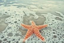 Ocean Waves / summer.sand.salt.sea / by Heidi Darrington