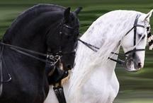 Horses / by Linda King