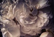 .flowers. / by Karolina Subrtova