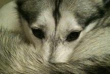 Beautiful Animals / by Linda King