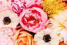 florals. / by Carley Rasmussen