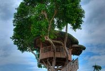 Tree House Love / by Kelley Lockwood
