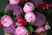 Pink 'n' Purple / by Jerri Gallup Johnson