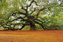 I <3 Trees / by Brandi Sumpter