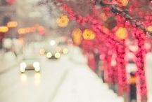 winter wonderland / by Haley Johnson