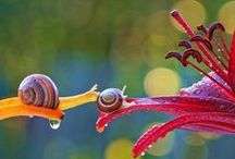 Nature is Awesome / by Matt Cuthbert