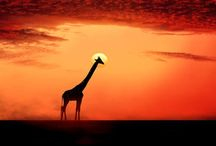 Breathtaking.  / Visually stunning and awe inspiring / by Morgan Alexei Moliver