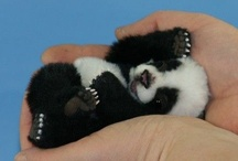 Aww.  / Baby sized things are adorable / by Morgan Alexei Moliver