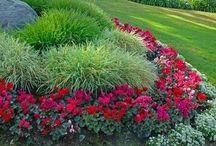 gardening / by Brenda Gibson
