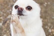 Best in Show / My favorite dog Pins. / by Genie Stubbs