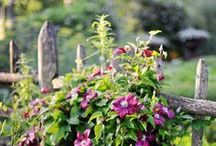 Garden ♣ / by Jana J.