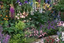 GARDENS / GARDENS...Plants & Flowers Everywhere / by Linda Guy Phillips