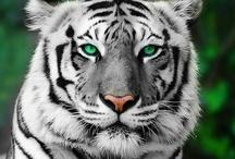 Animals :-)  / by Sarah Donaldson
