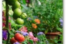Growing Stuff / by Tina Surman Langton