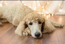 Dog Portraits / by Alana Joyner