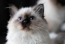 cute pets / by Ashley Robinson