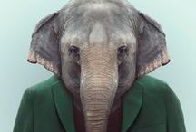 EXPOSE: Zoo Book / http://www.thisisourfauna.com/post/view/626/the-zoo-suits-up / by This Is Our Fauna
