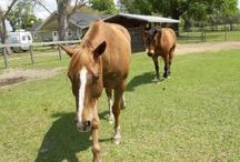 HORSES / by Nonilu