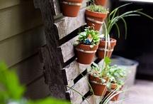 Gardening / by Maureen Mate