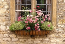 home - window boxes / by Anne McHenry