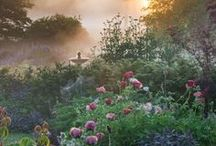 Forget about garden reality....bring on my dream garden! / Working toward my dream garden - parts of most of these pins might be included. / by Mike Hill