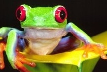 Frog's and Toad's / by Sarah Nelson Smith