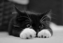 Kitties Dagnamit! / by Kim Dellow