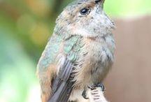 Wings I / Birds, Butterflies, Fowl / by Carol ~