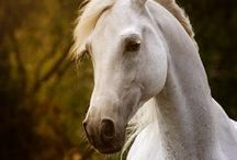 Horses, Magnificent Creatures / by Carol ~