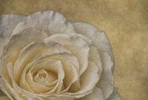 Art ~ Flower Paintings  / by Carol ~