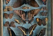 Moths and other pretty bugs. / by Sam Harris