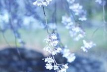 Shades of Blue in Nature / Thank you for following me :) / by Carol ~