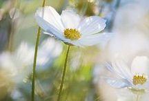 Dasiy Mae's Garden / by Carol ~