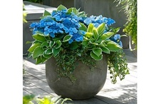 container plants / container gardening... ornamental PLANTS... terrariums... topiaries... bonsai... / by Pixel Musings