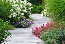 Outdoor beauty / by Angie Chumley