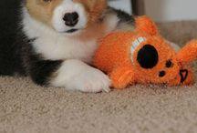 Puppy Lovin' / by Brittany Cavazos